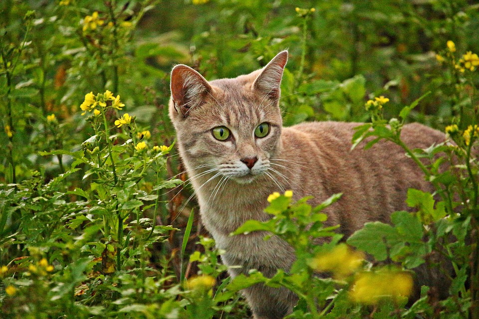 Tashirojima: Cat Island