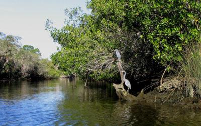 Koreshan State Historic Site, Florida