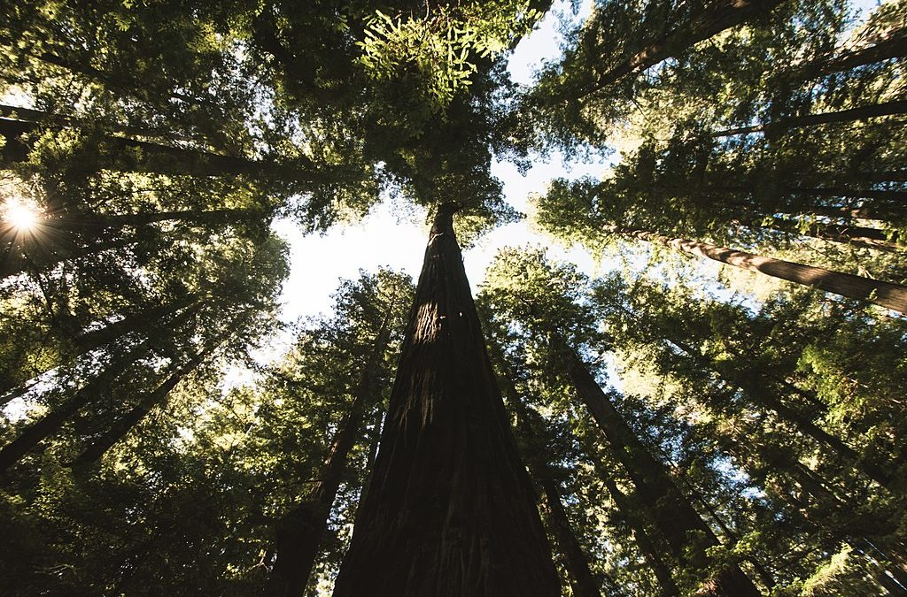 Humboldt Redwoods State Park: Avenue of the Giants