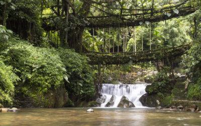 The Living Root Bridges of Meghalaya
