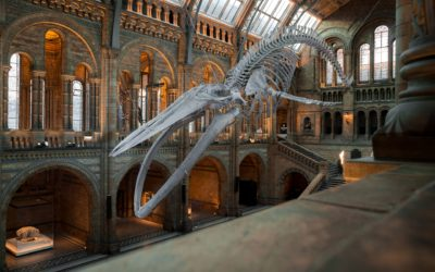 National History Museum, London. Take a Tour