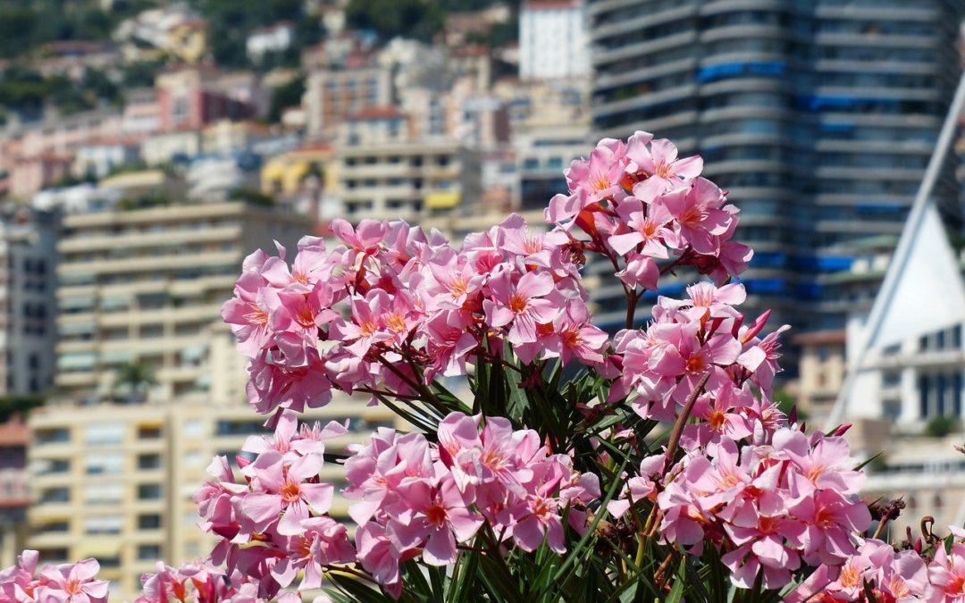 Virtual Tour. Monaco Then and Now